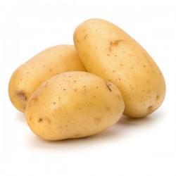 Pommes de terre Ditta