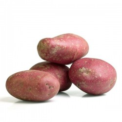 Pommes de terre Désirée