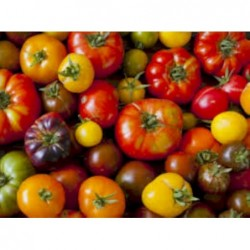 Tomates anciennes assorties