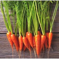 Mini carottes apéro