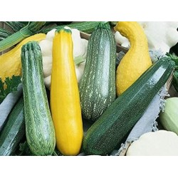 Courgettes assorties